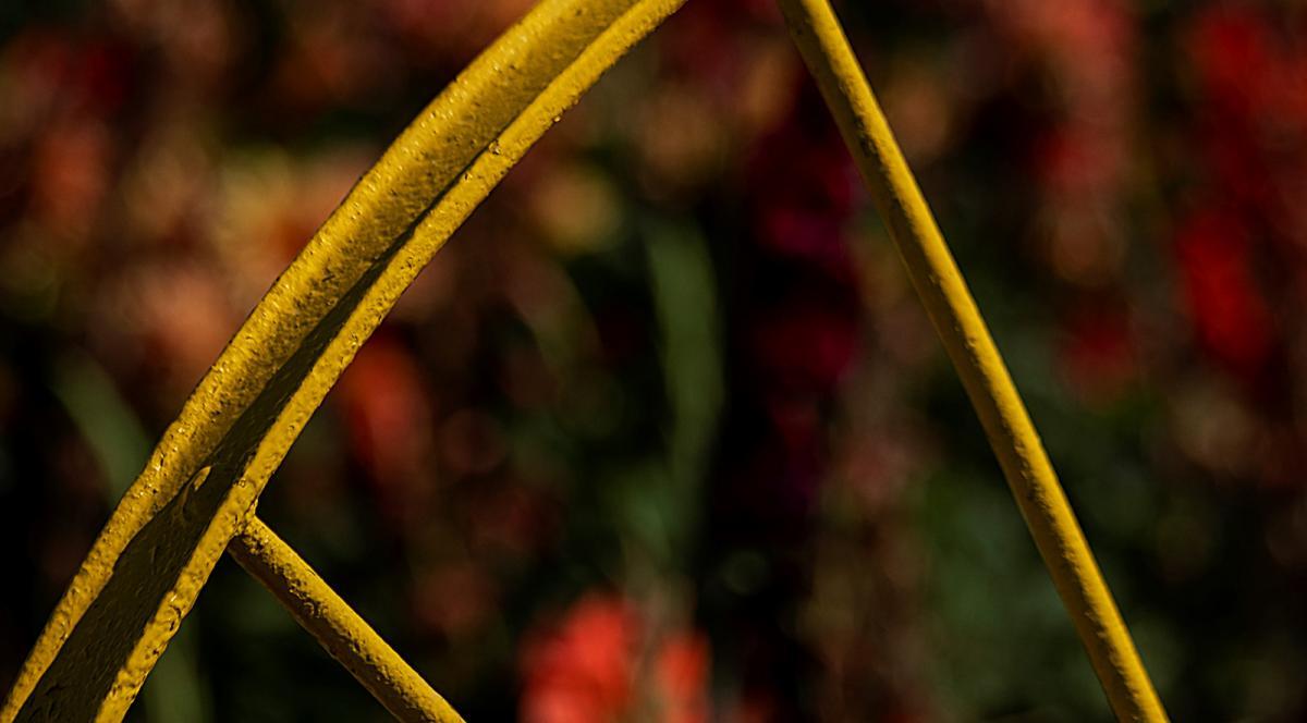 gerry-boretta-sunflower-shoot-10