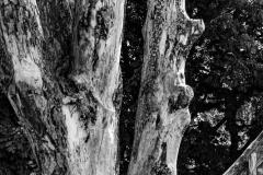 Michael-Chin-Old-tree
